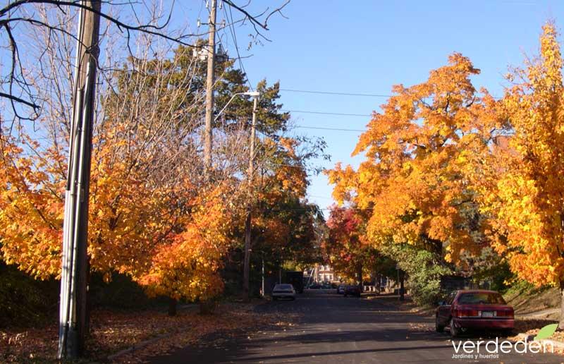 árboles en calle