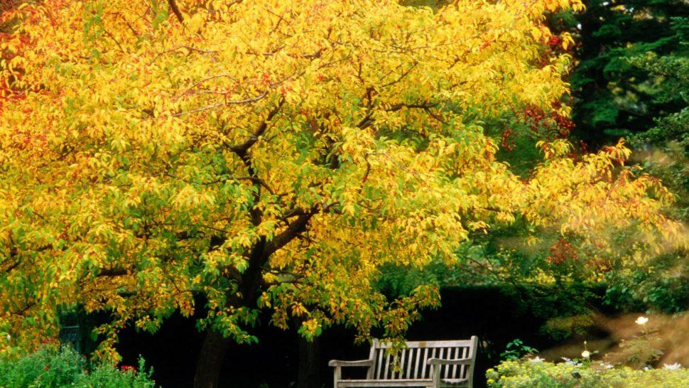 Cartas del paisaje- Paisaje otoño