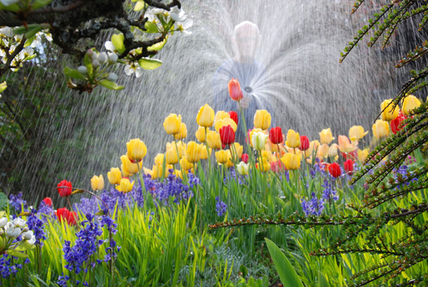 Concurso: Garden Photographer of the Year de Kew gardens