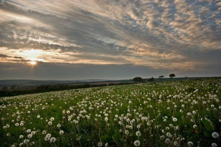 Garden Photographer of the Year: Nick Shepherd Spring Seed