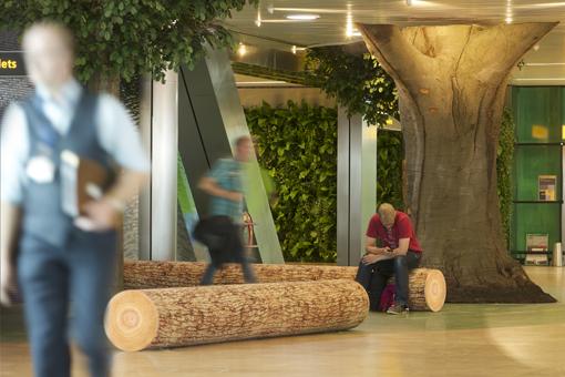 Árbol de 130 años en el aeropuerto de Ámsterdam