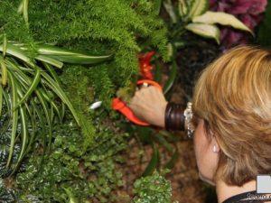 Curso Intensivo de Jardines Verticales en Madrid