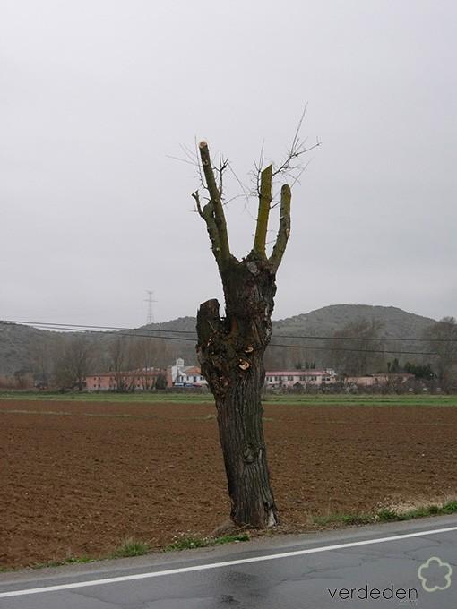 Barbaridades en Jardinería: árbol en carretera