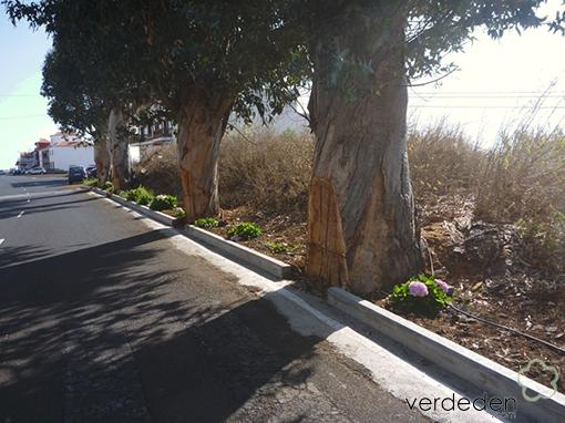 Barbaridades en Jardinería: José Arrieta León- Isla de La Palma, en Puntallana (eucaliptus)