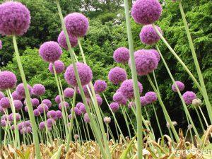 10 especies comestibles para tu jardín