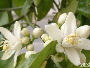 7 Paisajes con los que disfrutar de la primavera