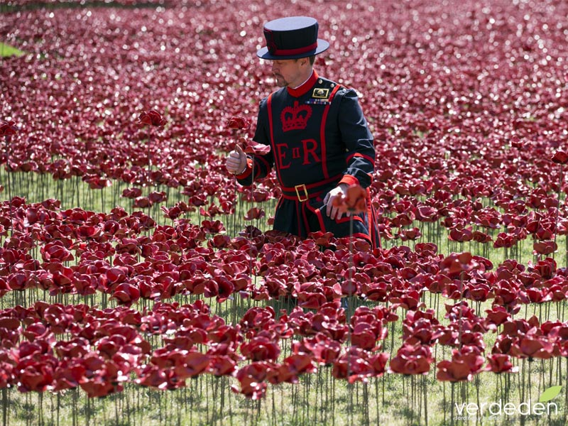 Beefeater, blood swept lands and seas of red