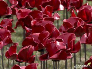 Amapolas de cerámica para conmemorar la primera guerra mundial