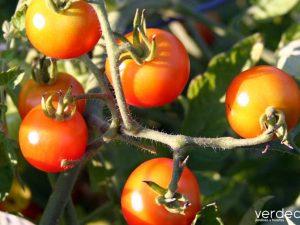 agricultura ecológica: 10 preguntas para conocerla