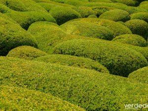 Recopilación de arbustos