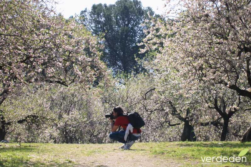 Quinta los molinos- Fotografiando los almendros en flor