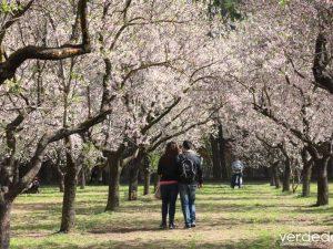 Visitando los almendros en flor de la Quinta de los Molinos