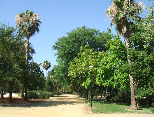 1 panoramica del parque jose celestino mutis1 verdeden - Master en paisajismo ...