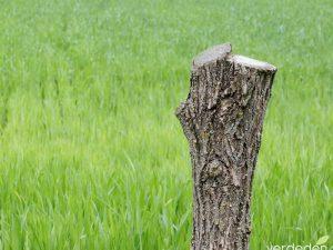 Cuidado con cortar o podar un árbol en tu propiedad